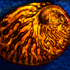 Abalone - Thomas Lindley Photography